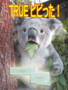 trueびびったコアラ