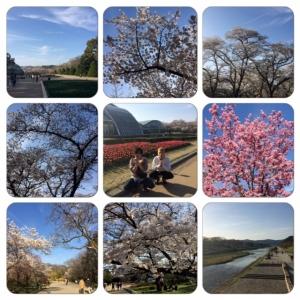 20140401kamogawa