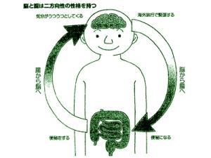 脳と腸は双方向