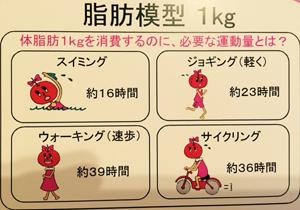 体脂肪模型説明