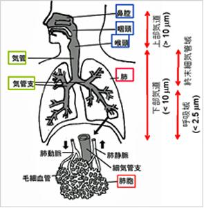 肺まで届くホコリは危険