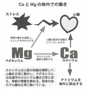 カルマグと心臓