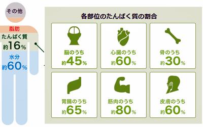プロテイン2号の2号 | ALL DAYS☆夏休み